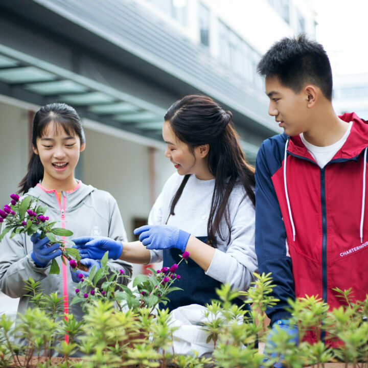 Why Service-Learning is Important for Your Child – Charterhouse Service Learning
